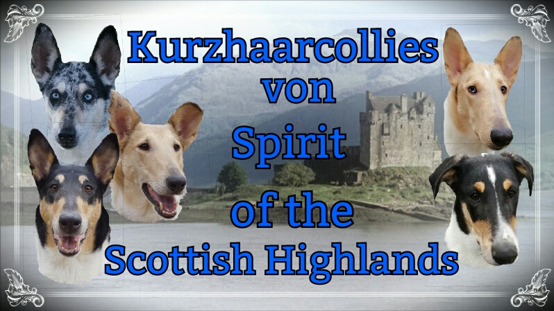 Spirit of the Scottish Highlands